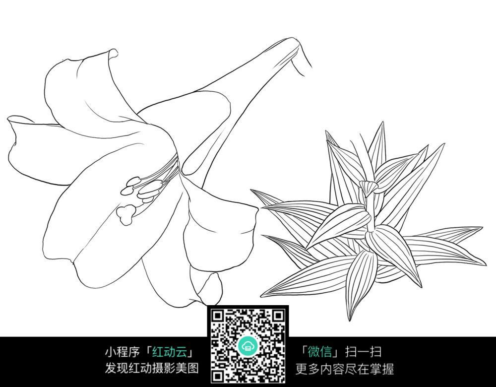 卡通花卉花朵手绘线描