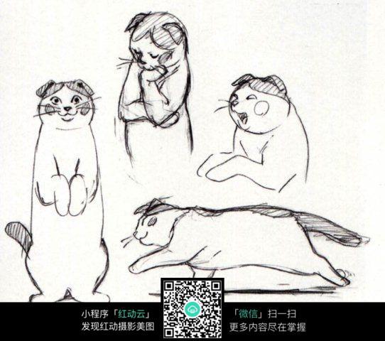 卡通猫手绘线描画