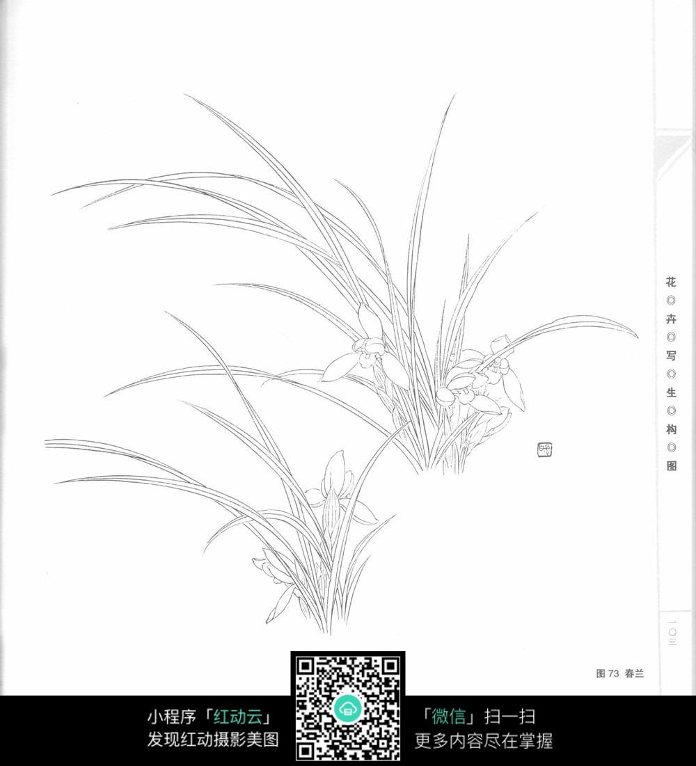 简单手绘图片花草树木-兰花手绘线描素材图片免费下载 编号3707048