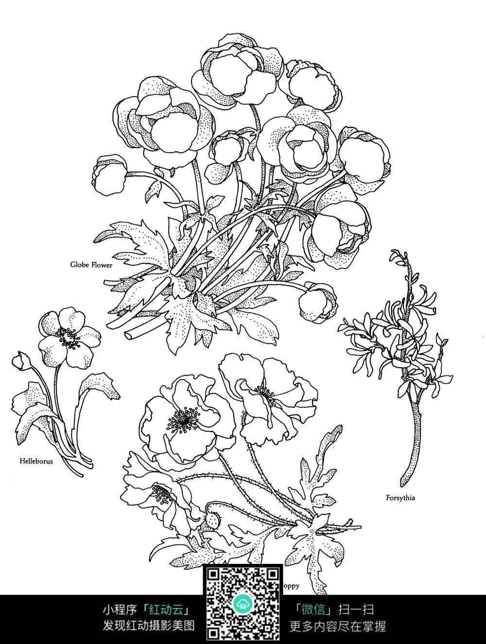 兰花罂粟图案素材