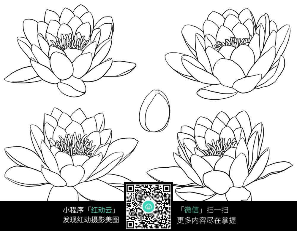 莲花手绘插画图片_花草树木图片