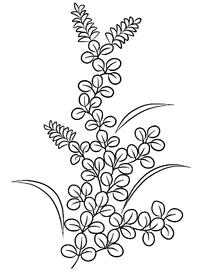 绿叶植物线描