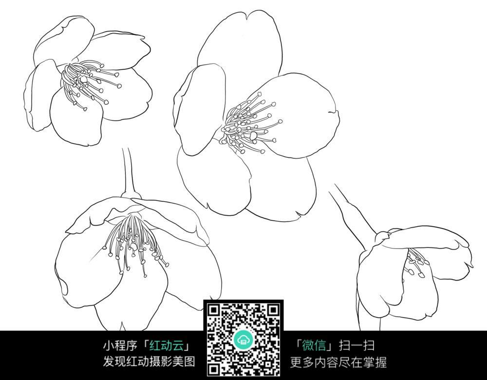 梅花花朵手绘线稿