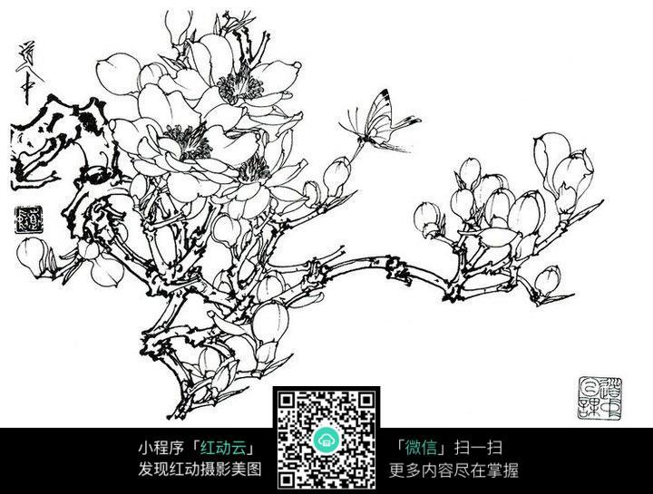 梅花蝴蝶手绘线稿图片免费下载