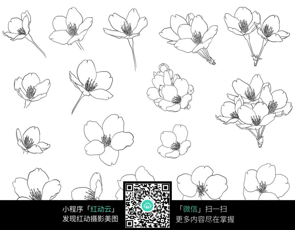 梅花手绘图图片_花草树木图片