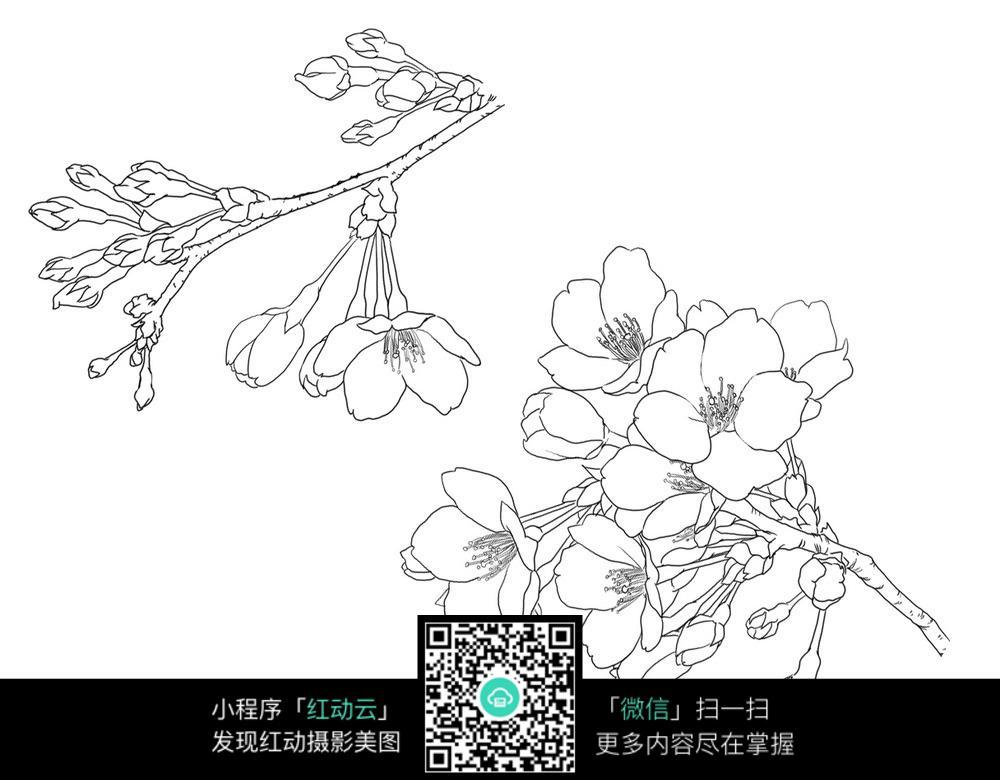 梅花手绘图形图案_花草树木图片