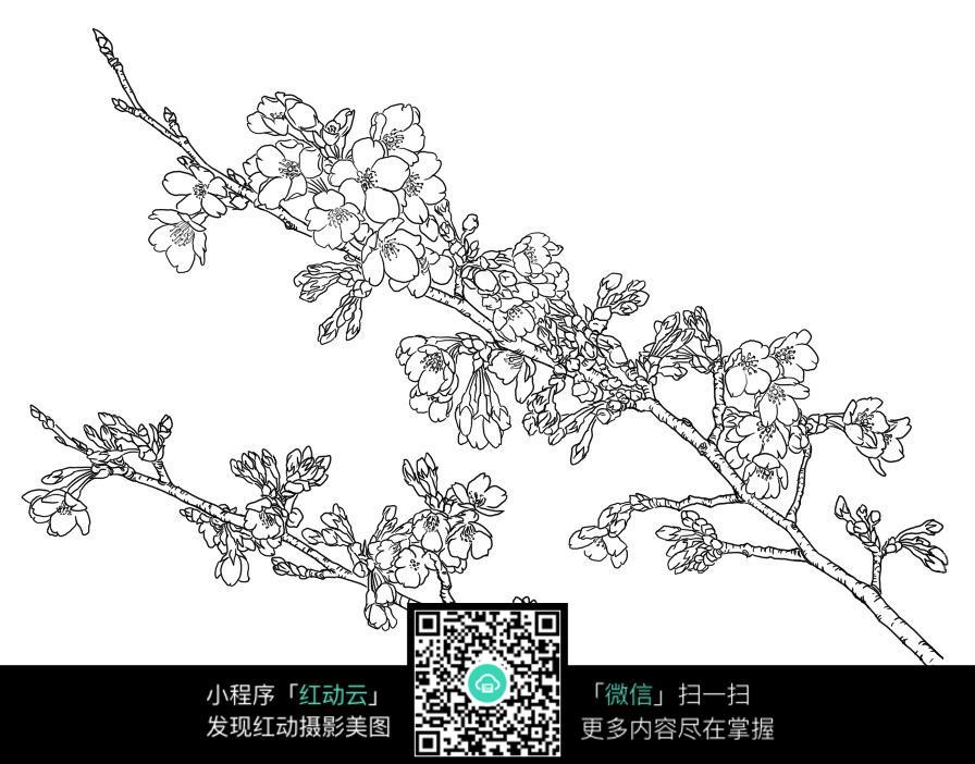 梅花手绘线稿_花草树木图片
