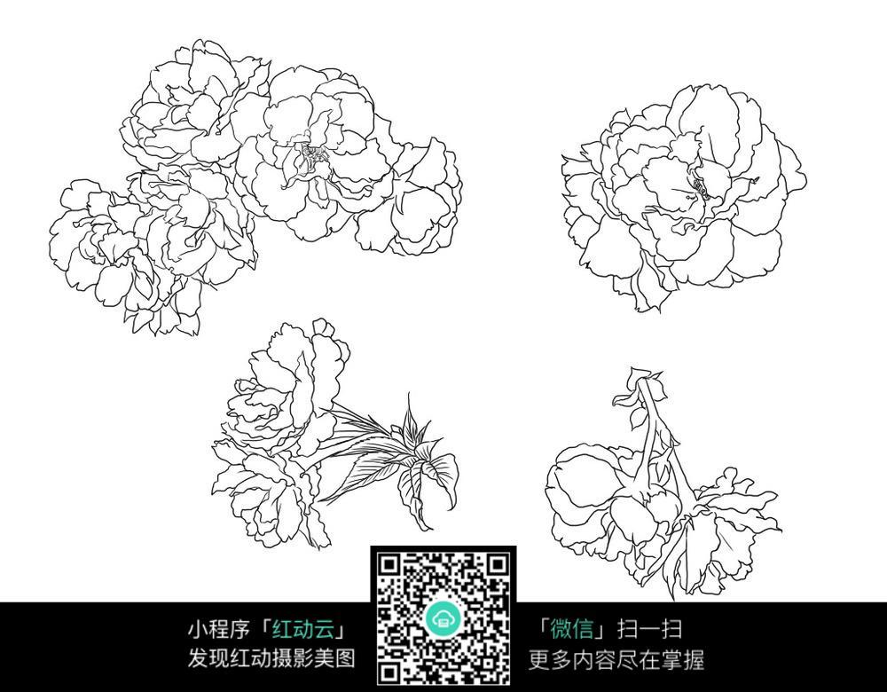 牡丹花花朵花卉线描