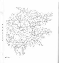 牡丹花开放写生线描