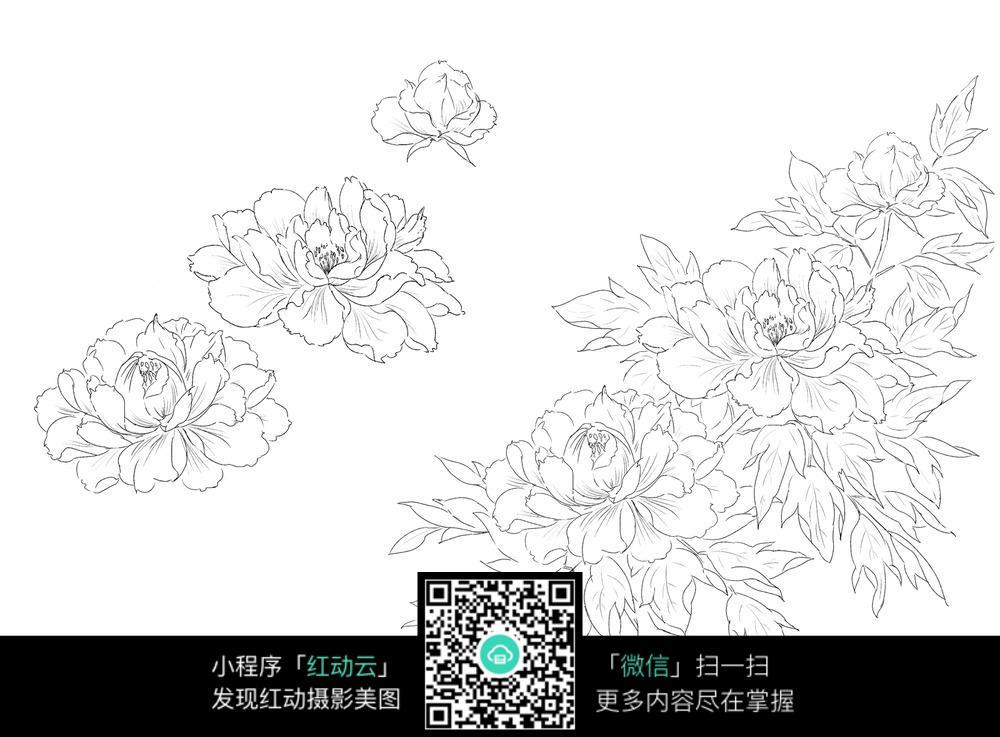 牡丹花手绘线描画