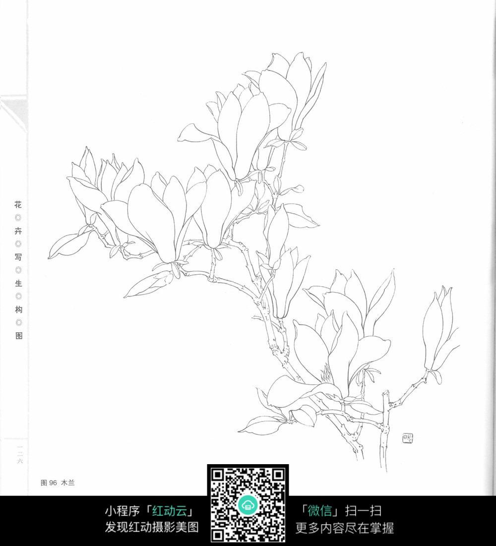 木兰手绘线描图片