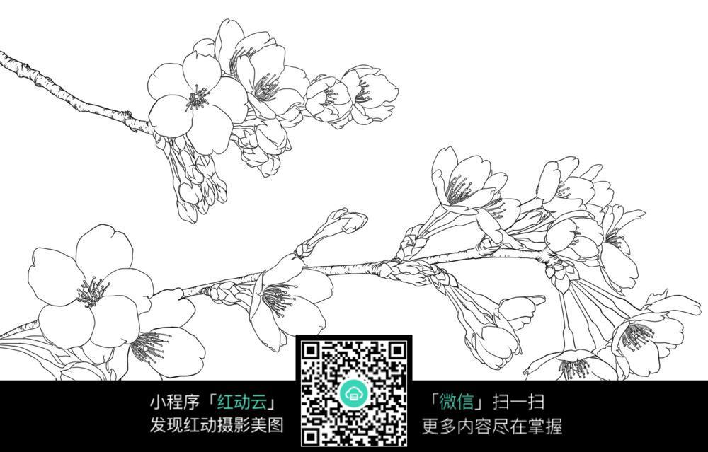 漂亮的梅花手绘线稿图片免费下载 编号3698582 红动网