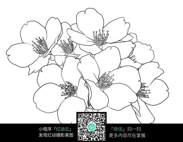 免费素材 图片素材 漫画插画 花草树木 漂亮的桃花手绘线描稿  请您图片