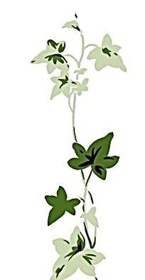 藤蔓带花简笔画