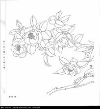 山茶花卉花朵线描