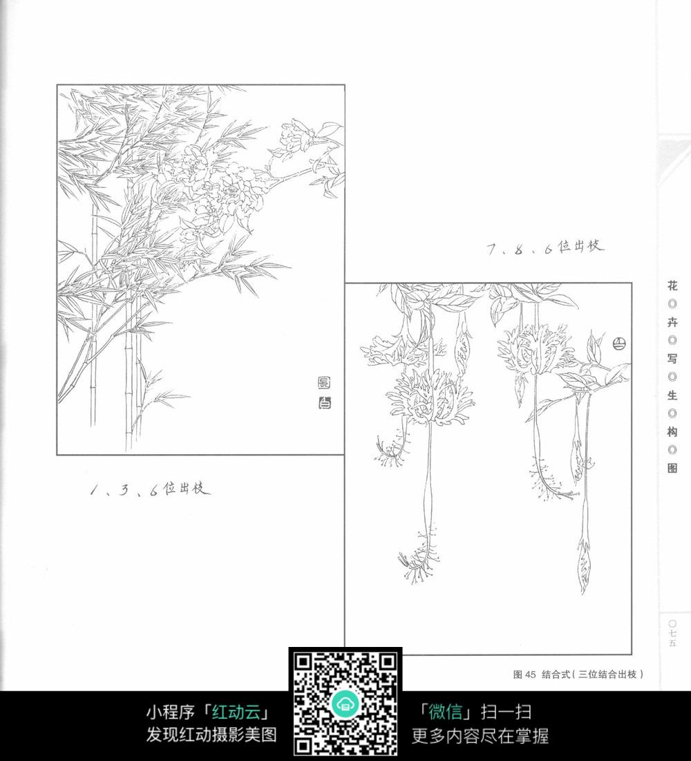 手绘竹子线稿图片