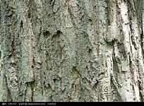 树干上的树皮摄影图图片