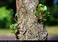 树干树皮特写图片3D材质贴图