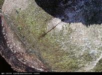 树皮高清图片素材