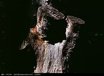 树皮纹理图片