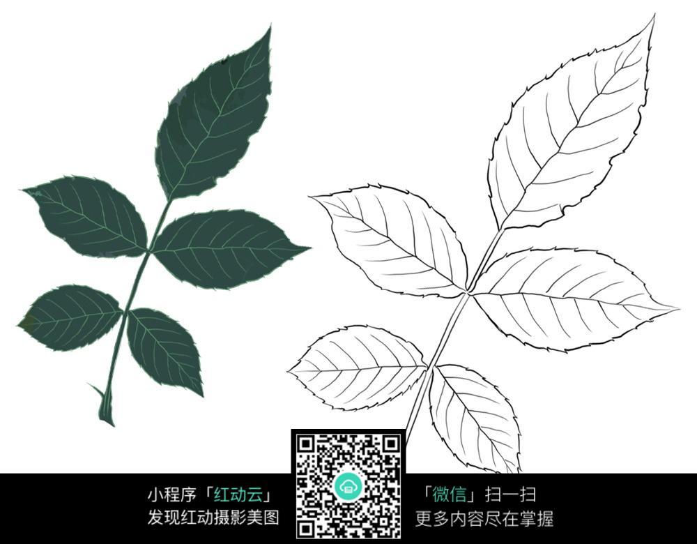 植物素材 手绘植物 植物插图 树叶手绘图 花卉手绘图 植物上色稿 叶子