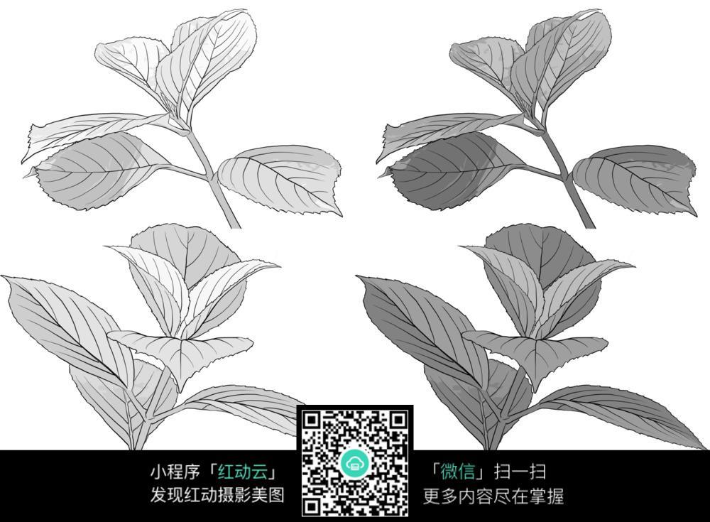 树叶线稿手绘图图片_花草树木图片