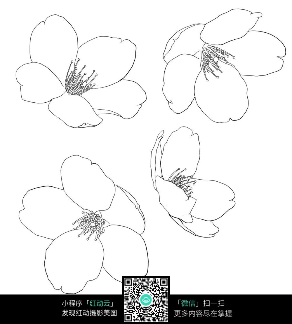 桃花手绘线描稿图片