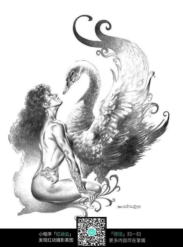 天鹅美女手绘素描画