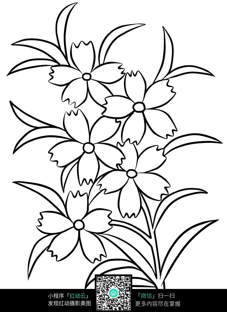 简笔画太阳花的画法
