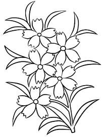 小太阳花花卉线描