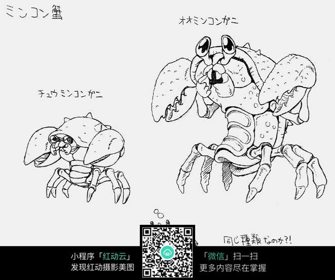 螃蟹手绘线描图