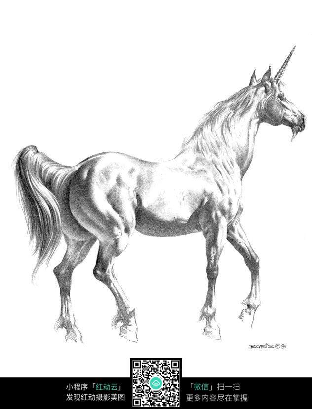 行走的白马手绘素描画