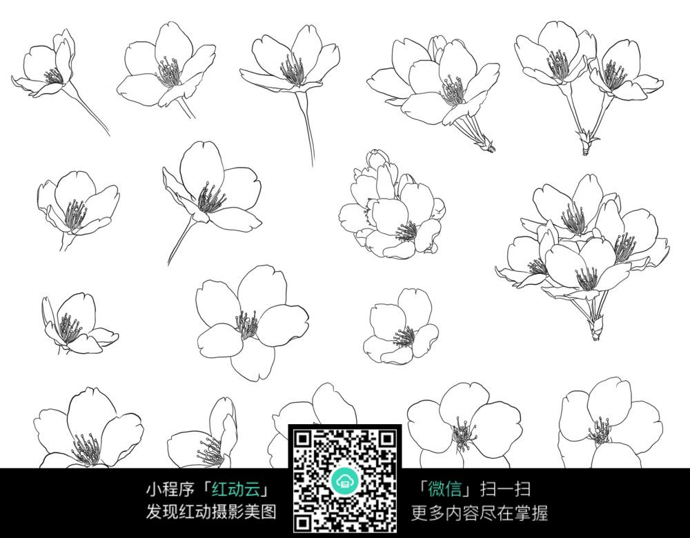 樱花梅花手绘线图形图片