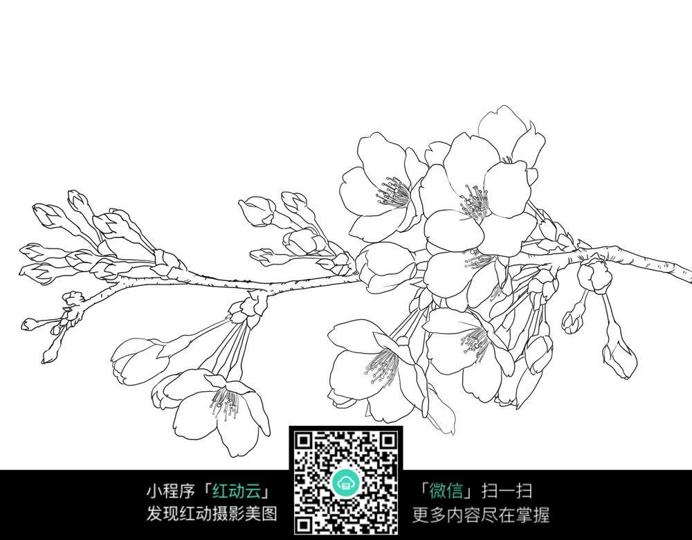 一支梅花手绘线稿 手绘画