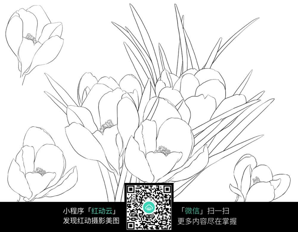 玉兰花花朵花卉线描图片