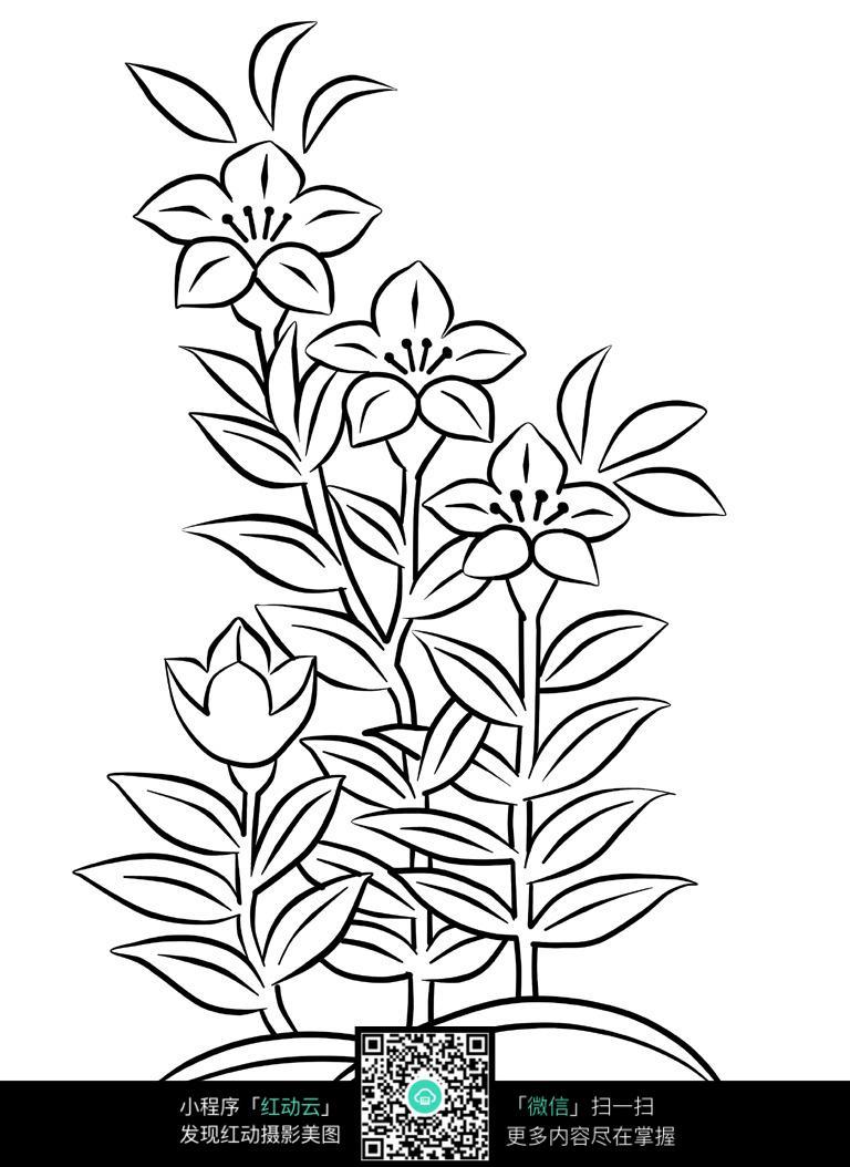 植物花卉线描图片免费下载 编号3707562 红动网图片