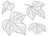 植物葫芦叶线描图片