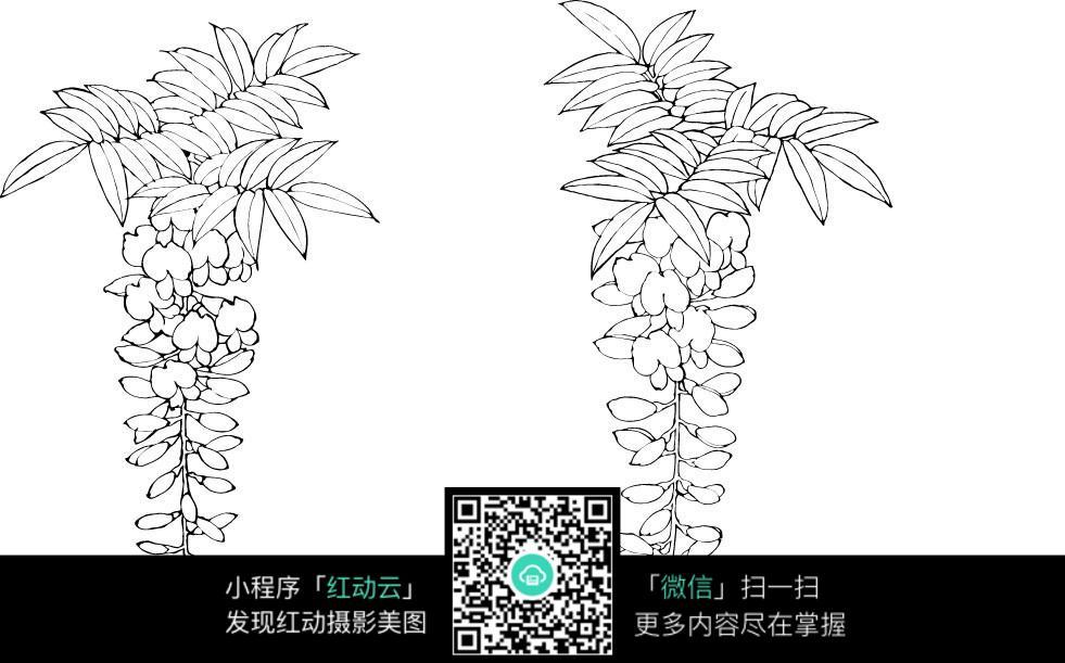 植物手绘线稿图片