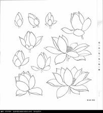 粉色的荷花插画图片花瓣小学需要花朵准生证读图片