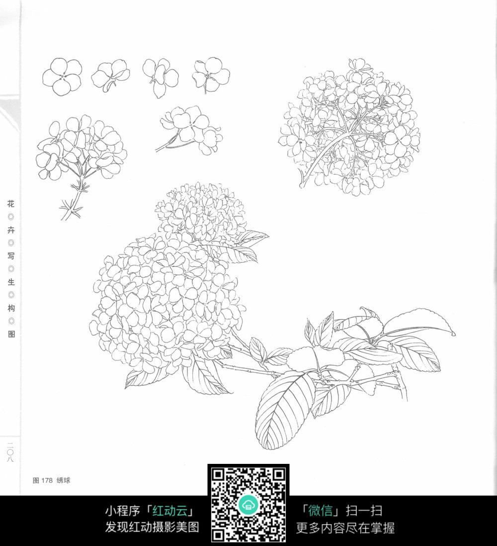 手绘花朵花瓣植物叶子图形