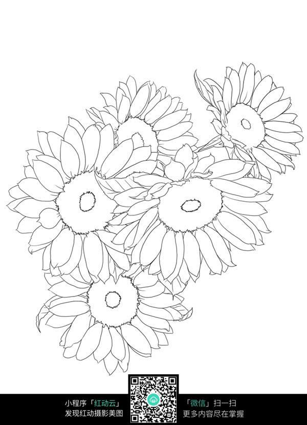 手绘向日葵花瓣线条图形