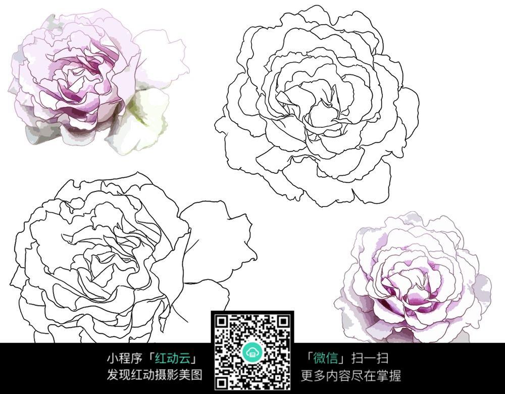 粉色花瓣 植物