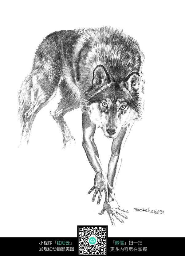 凶恶的狼手绘线描画