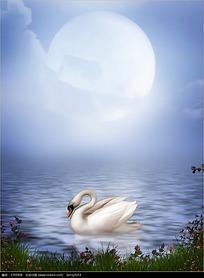 月光下的天鹅