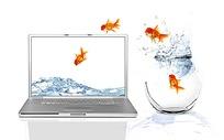 从玻璃瓶跃到电脑桌面的金鱼创意图