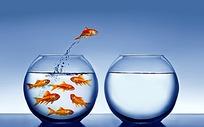从一个玻璃瓶跃到另一玻璃瓶的金鱼
