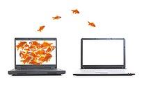 从一台电脑桌面越到另一台的金鱼