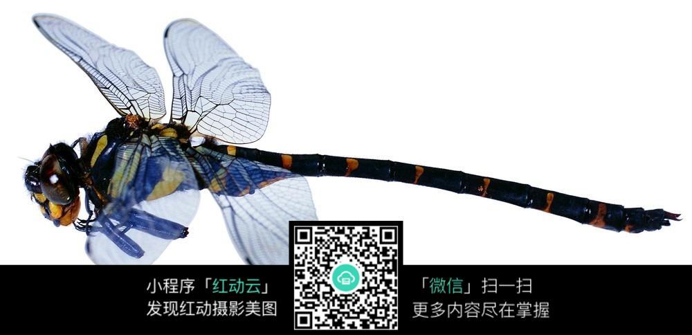 蓝色 翅膀 蜻蜓 高清图 昆虫世界图片图片