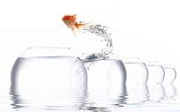 连续跳跃的金鱼
