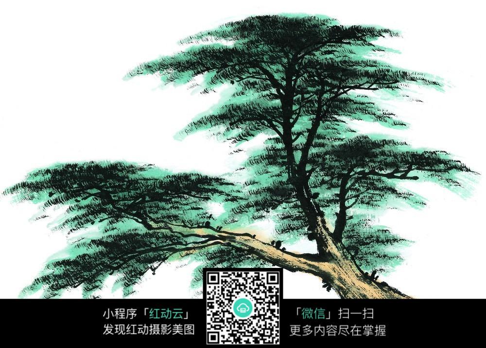 倾斜的松树手绘图图片